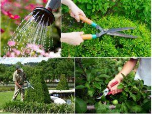 Dịch vụ chăm sóc cây xanh tphcm, bình dương, long an, tây ninh