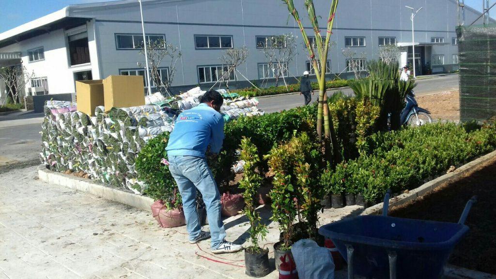 dịch vụ chăm sóc thi công thiết kế sân vườn của Ngoại Thất Xanh tại nhà máy