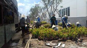 công ty cây xanh Long An thi công thiết kế sân vườn