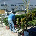 Công ty chăm sóc cây cảnh Tphcm - Ngoại Thất Xanh