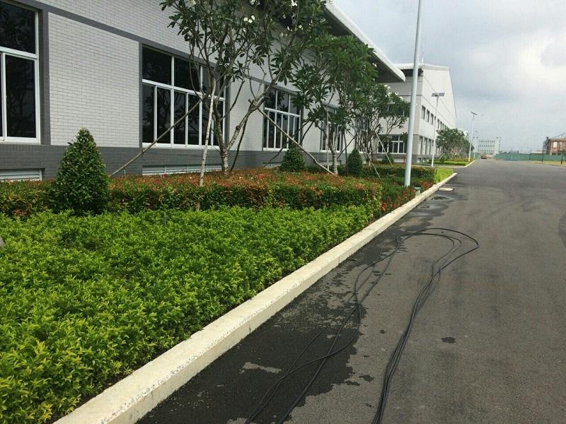 Công ty chăm sóc cây xan Bình Dương uy tín.