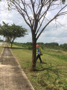 Dịch vụ chăm sóc cắt tỉa cây xanh của Ngoại Thất Xanh tại Tphcm, Bình Dương, Tây Ninh, Long An