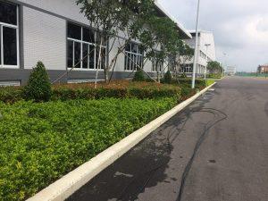 Dịch vụ chăm sóc cắt tỉa cây xanh đã tạo ra mảng xanh đẹp tại Bình Dương, Tây Ninh, Long An