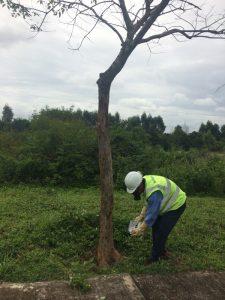 Với dịch vụ chăm sóc cây xanh cây cảnh của Ngoại Thất Xanh sẽ làm hài lòng quý khách hàng