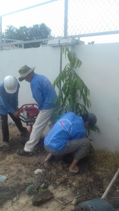 Ngoại Thất Xanh thi công dịch vụ tròng cây xanh tại công ty Jiwon Củ Chi