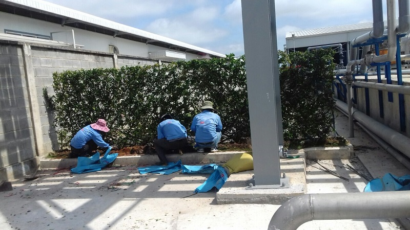 dịch vụ trồng cây cảnh tại Bình Dương.