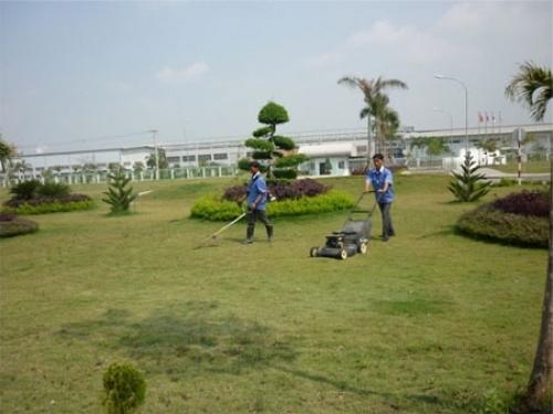 Công ty dịch vụ trồng và chăm sóc cỏ tại Long An