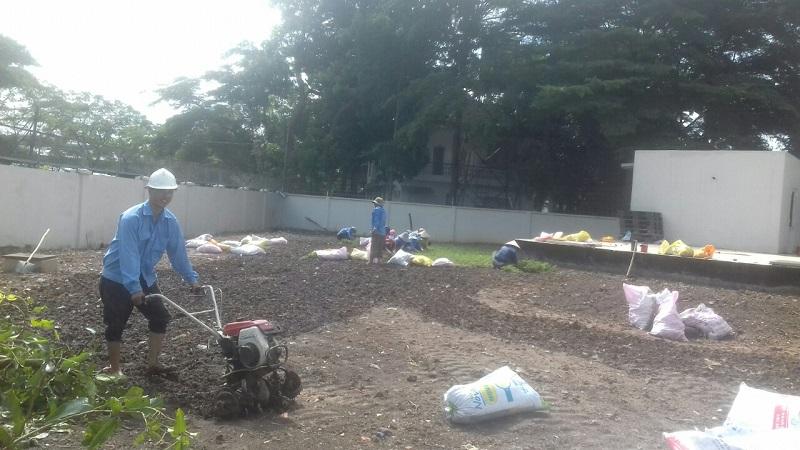 Dịch vụ trồng cỏ tại Hcm, Bình Dương, Long An, Tây Ninh luôn được khách hàng đánh giá cao