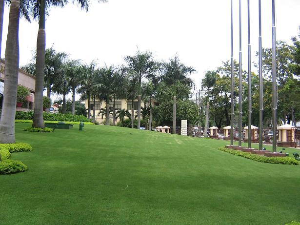 Cỏ nhung nhật được trồng rất nhiều nơi để tạo mảng xanh