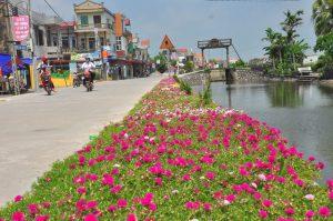 thảm hoa mười giờ được trồng nơi ven đường của khu đô thị