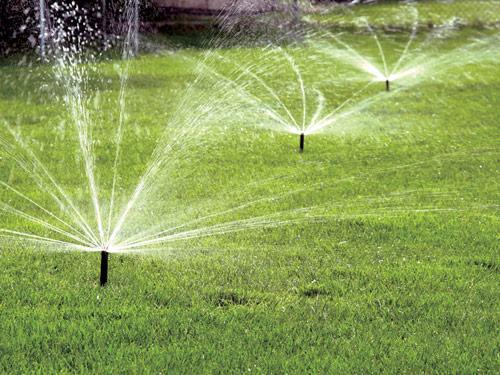 Tưới nước chăm sóc cỏ là điều cần thiết cho cỏ mọc tốt