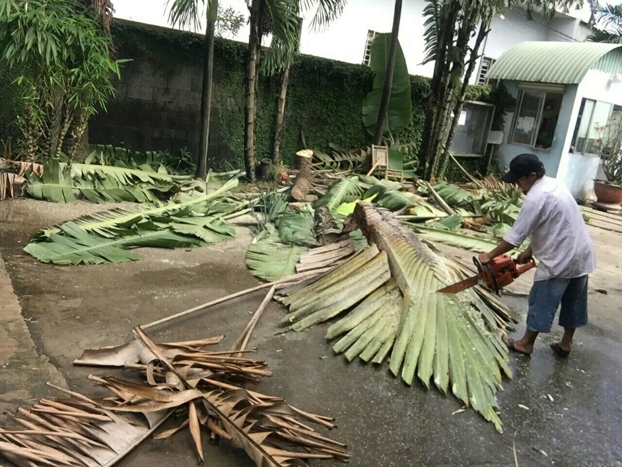 Cắt tỉa cây um tùm có khả năng đổ khi trời mưa bão