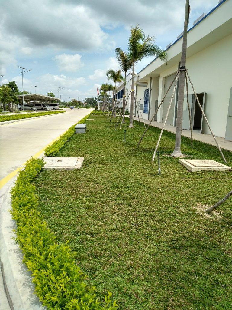 Những giới thiệu về chăm sóc cây xanh và thảm cỏ