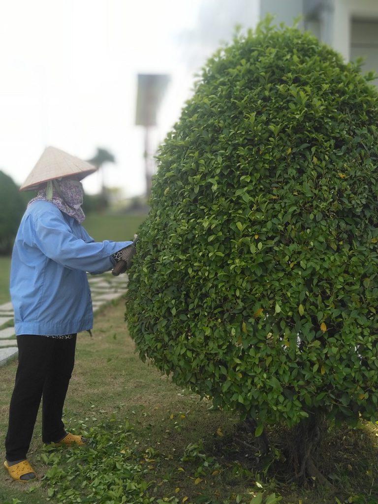Dịch vụ chăm sóc cây cảnh tại nhà