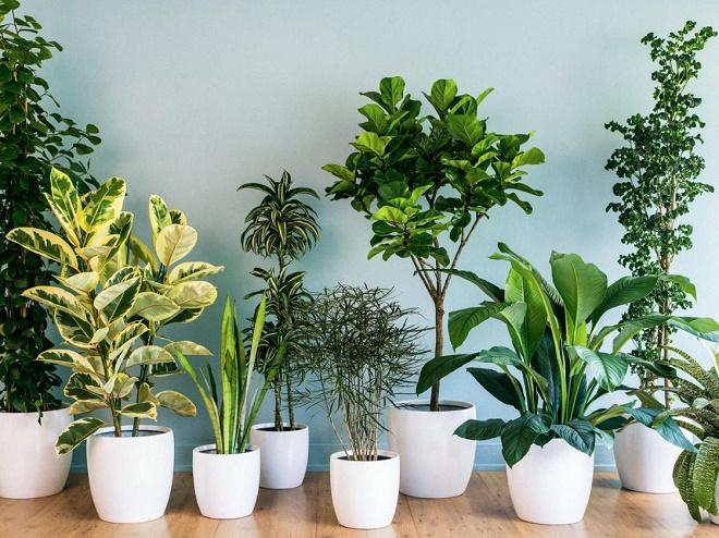 Những mẫu cây cảnh được ưa chuộng tại văn phòng làm việc