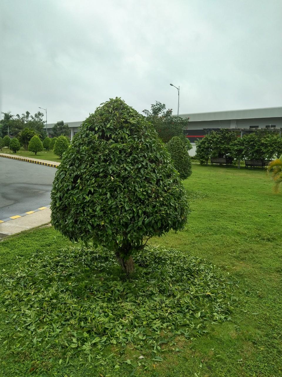 Công ty cây xanh tại Bình Dương