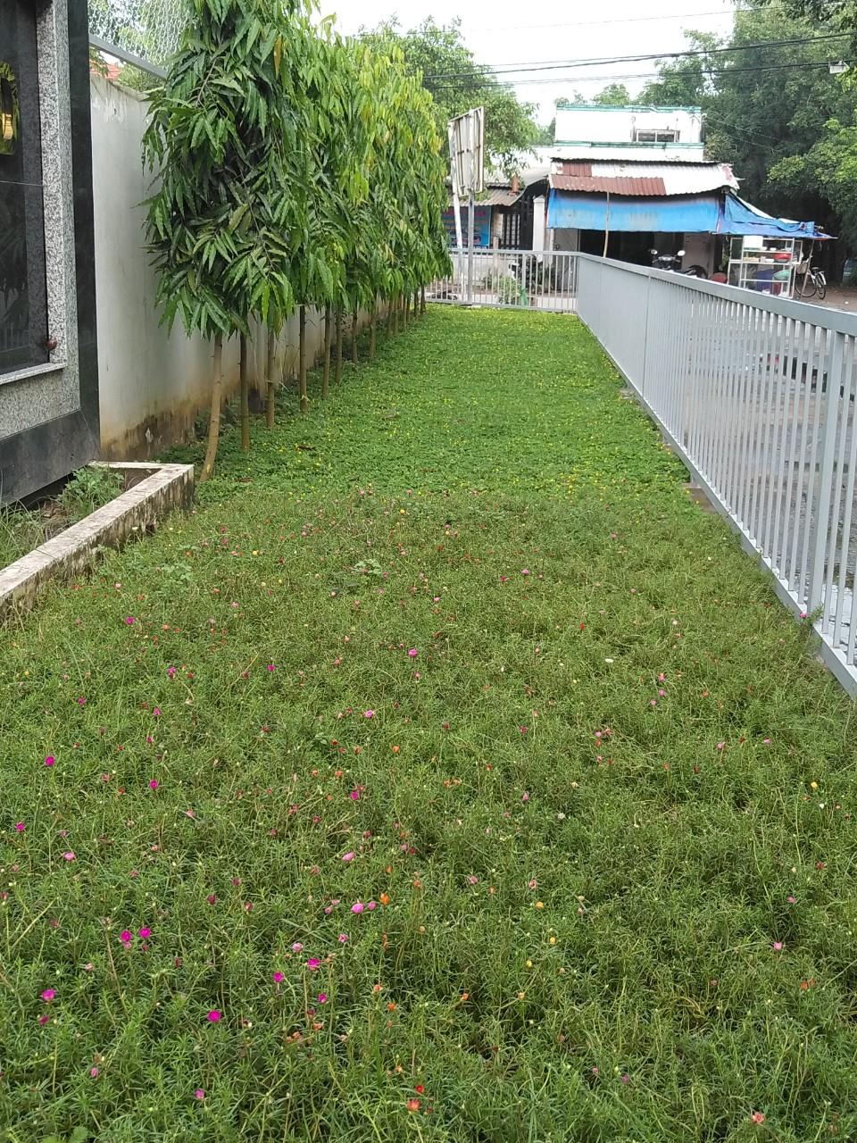 Lợi ích của thiết kế thi công cây xanh công trình