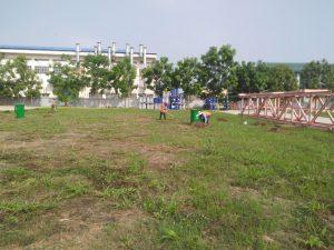 Ngoại Thất Xanh sẽ mang tới những giải pháp trồng cỏ phù hợp nhất