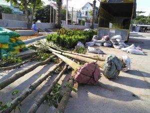 Dịch vụ trồng chăm sóc cây xanh tại Bình Dương của Ngoại Thất Xanh