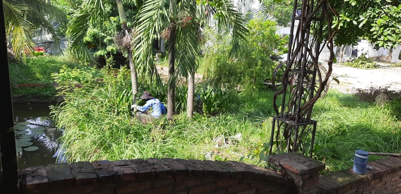 Chăm sóc cây xanh khu công nghiệp Sóng Thần