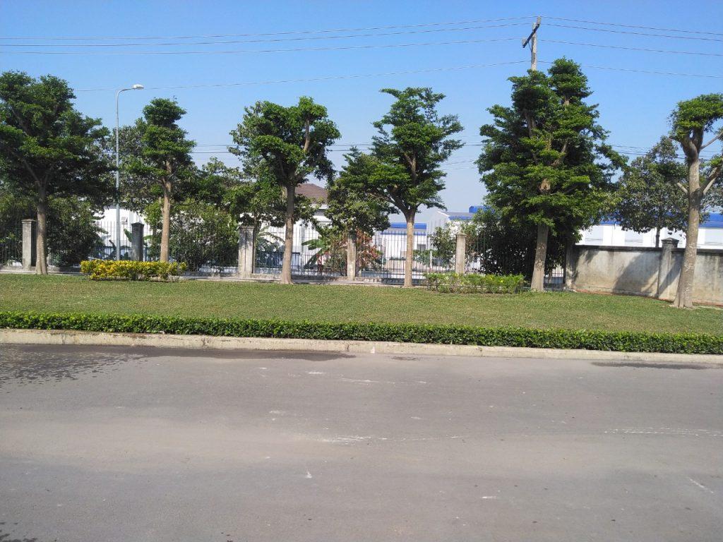 Dịch vụ trồng cỏ, cây xanh tại Gò Dầu Tây Ninh