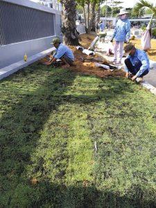 Dịch vụ trồng cỏ, cây xanh tại Cần Giuộc, Long An