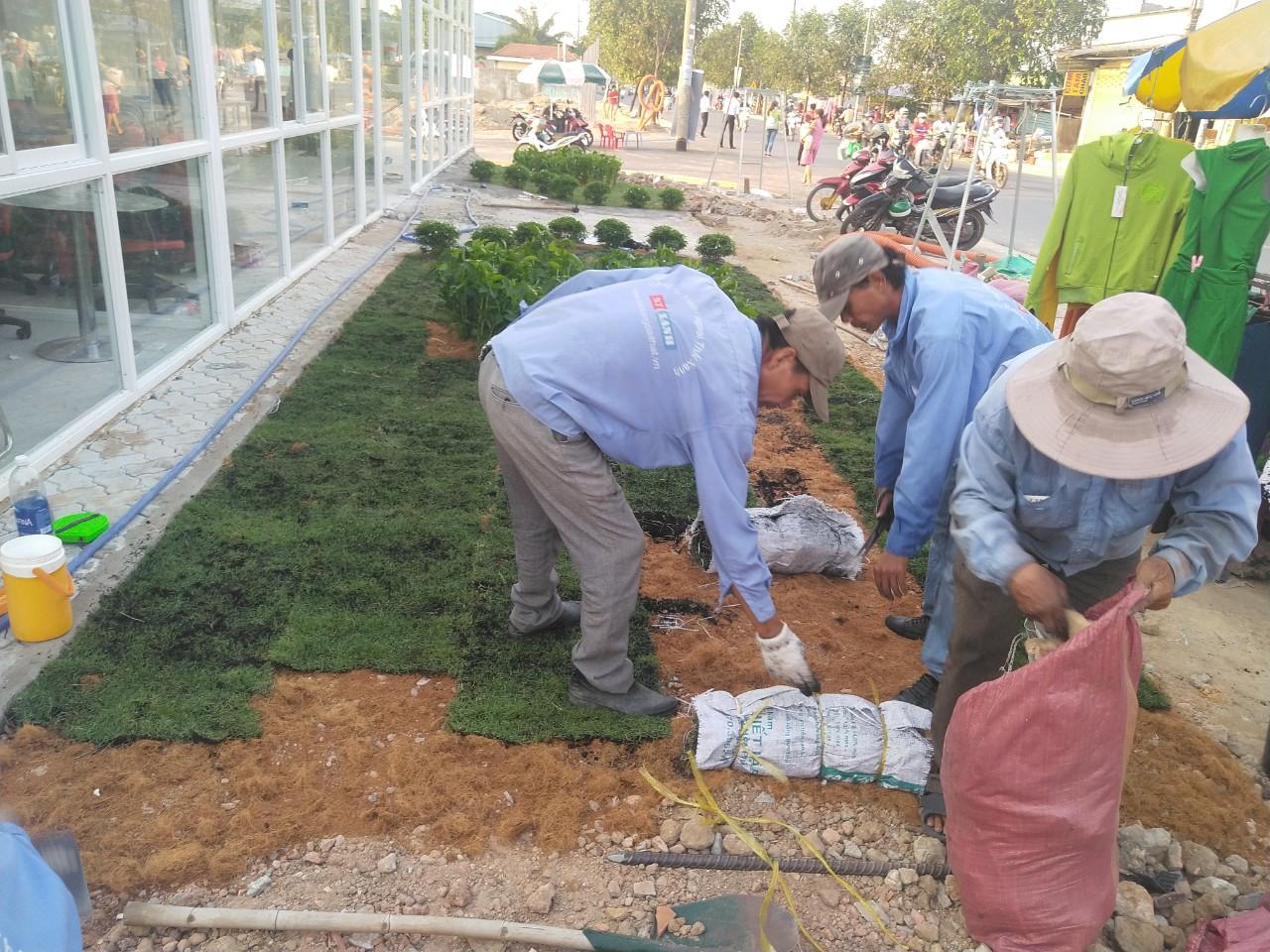 Dịch vụ trồng cỏ, cây xanh tại Đức Hòa Long An