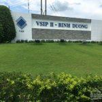 Dịch vụ chăm sóc cây xanh tại VSIP II Bình Dương