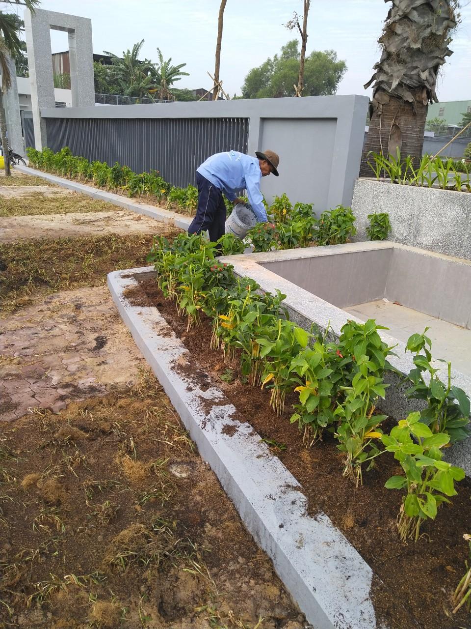 Dịch vụ trồng cỏ, cây xanh tại Đất Cuốc Bình Dương