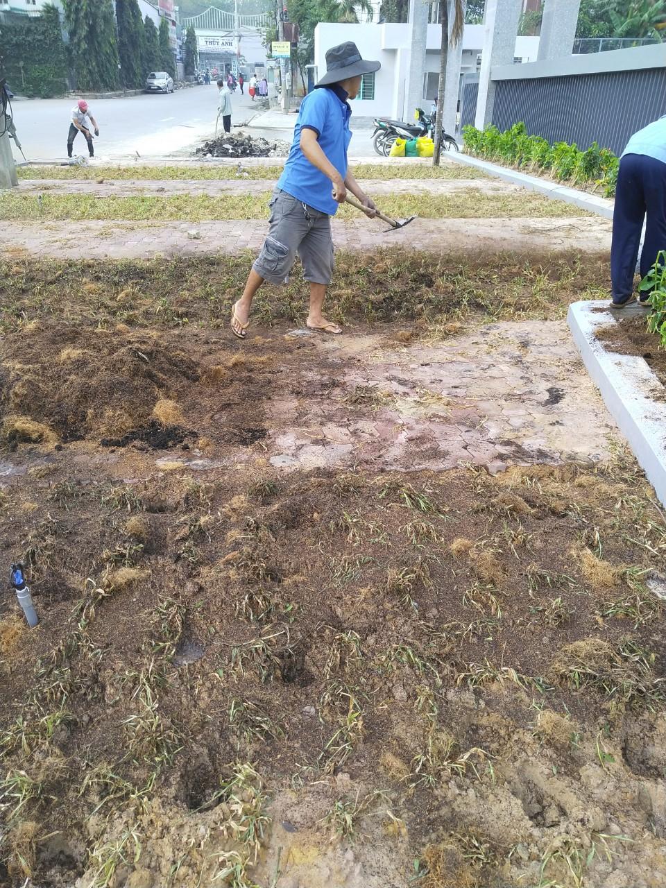Dịch vụ trồng cỏ, cây xanh tại Trảng Bàng Tây Ninh