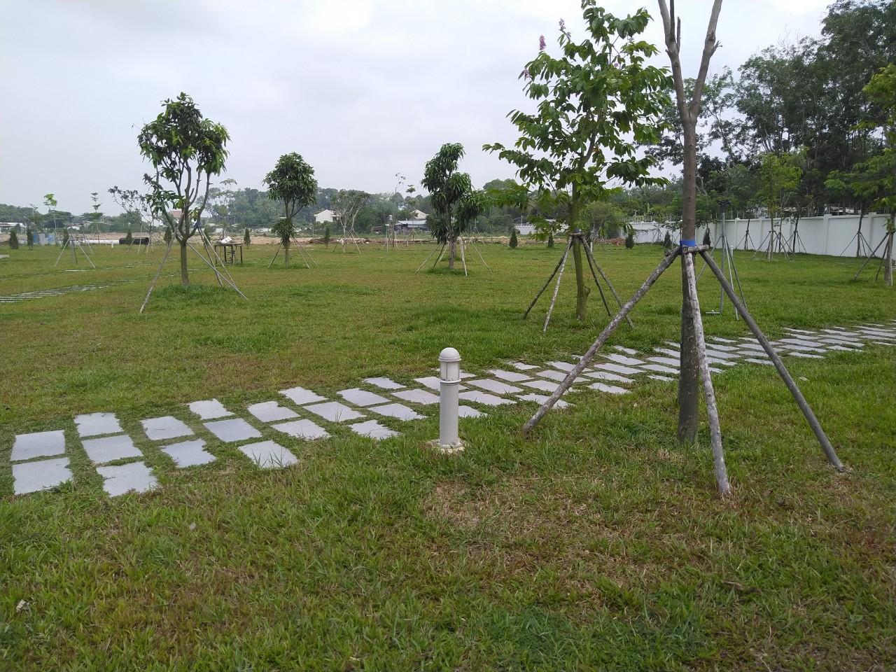 Dịch vụ trồng cây xanh, cỏ tại Chơn Thành Bình Phước