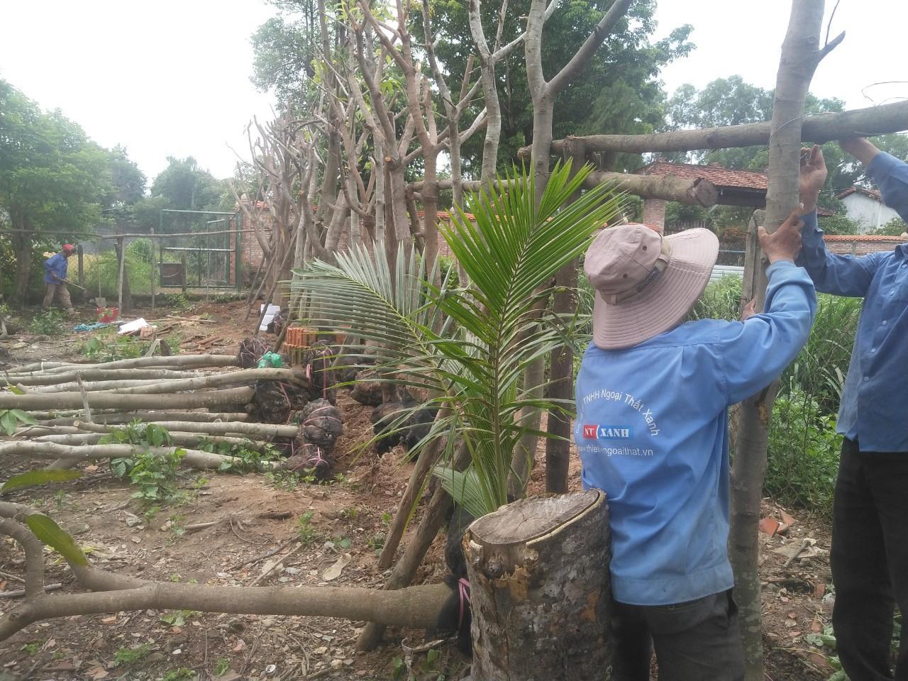 Dịch vụ trồng cây xanh của Ngoại Thất Xanh