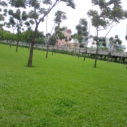 Mảng xanh tại Bình Dương