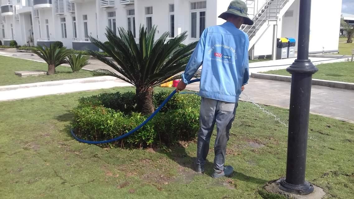 Thực hiện chăm sóc cây xanh tại Ngoại Thất Xanh