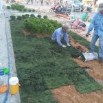Dịch vụ trồng cỏ, cây xanh Bình Dương