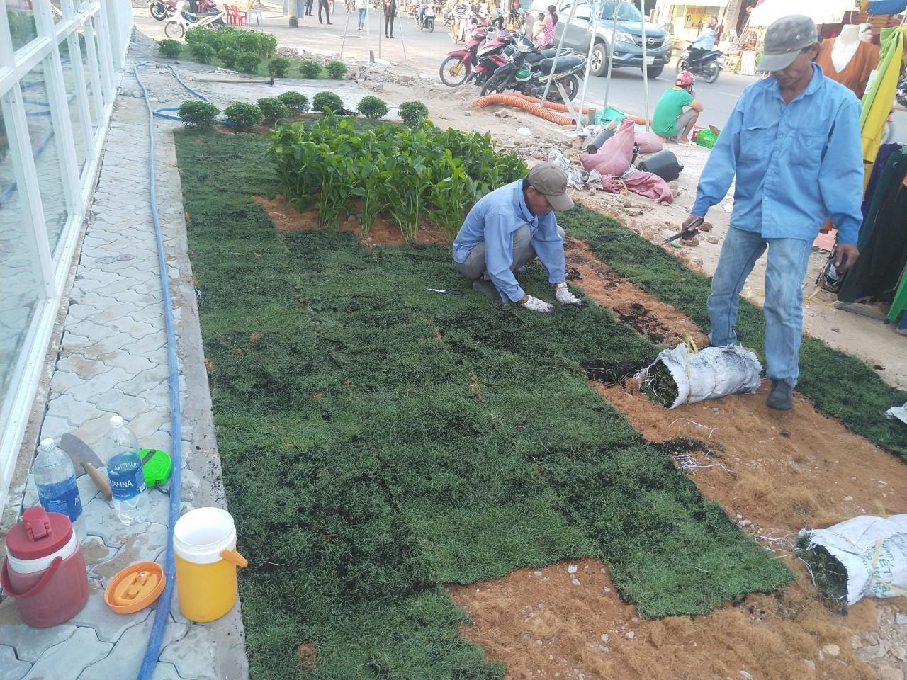 Thực hiện dịch vụ trồng cỏ tại Tân Uyên