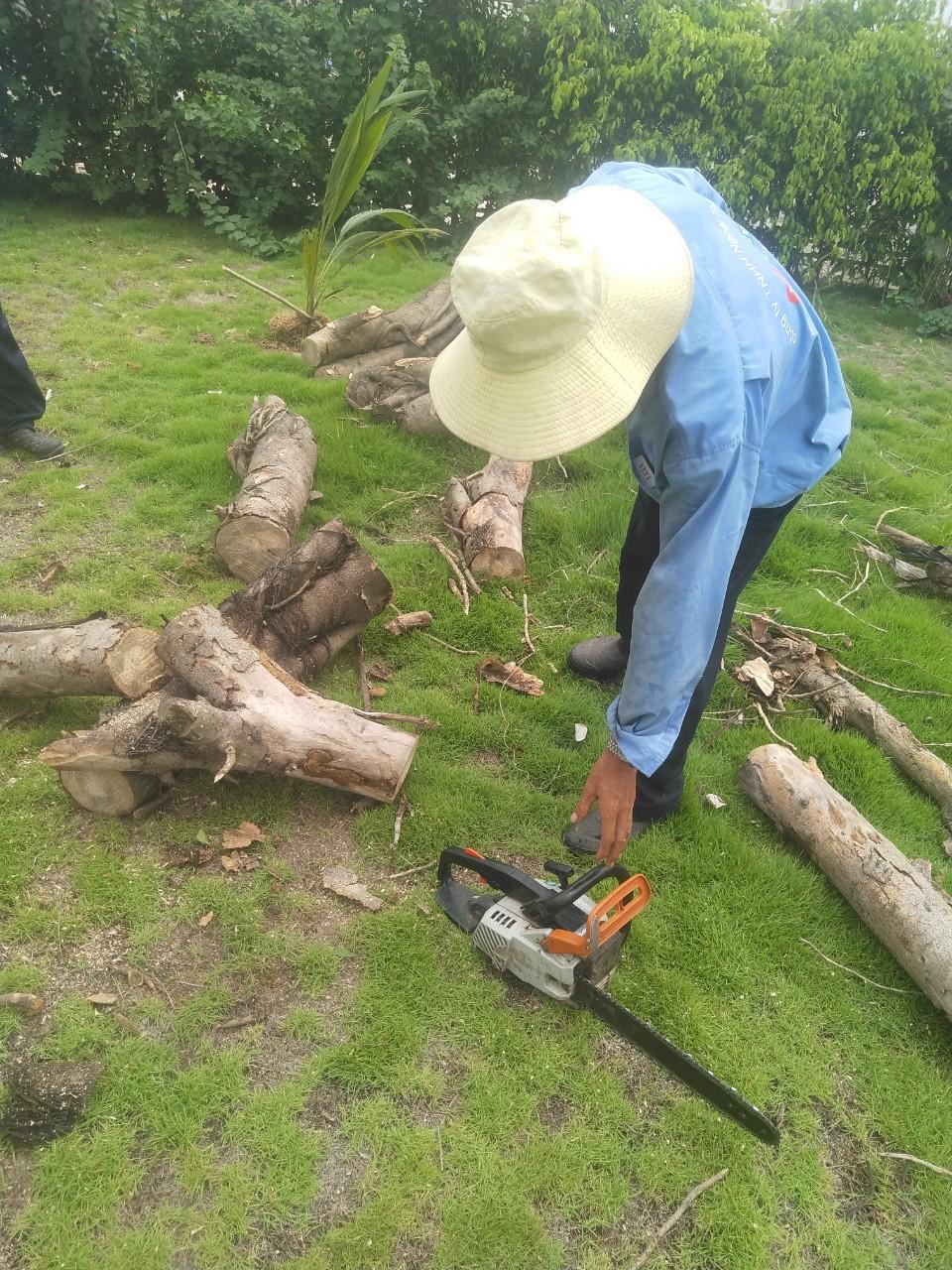 Dịch vụ chăm sóc cây xanh tại Tân Uyên Bình Dương