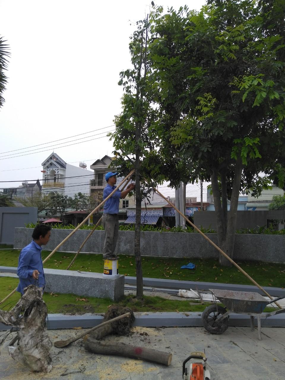 Dịch vụ trồng cỏ, cây xanh tại Thủ Dầu Một Bình Dương