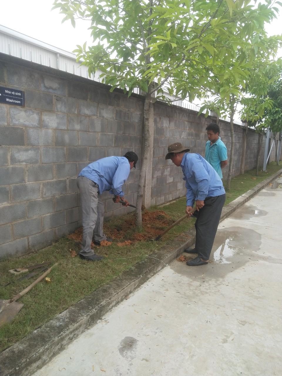 Dịch vụ trồng cỏ, cây xanh uy tín