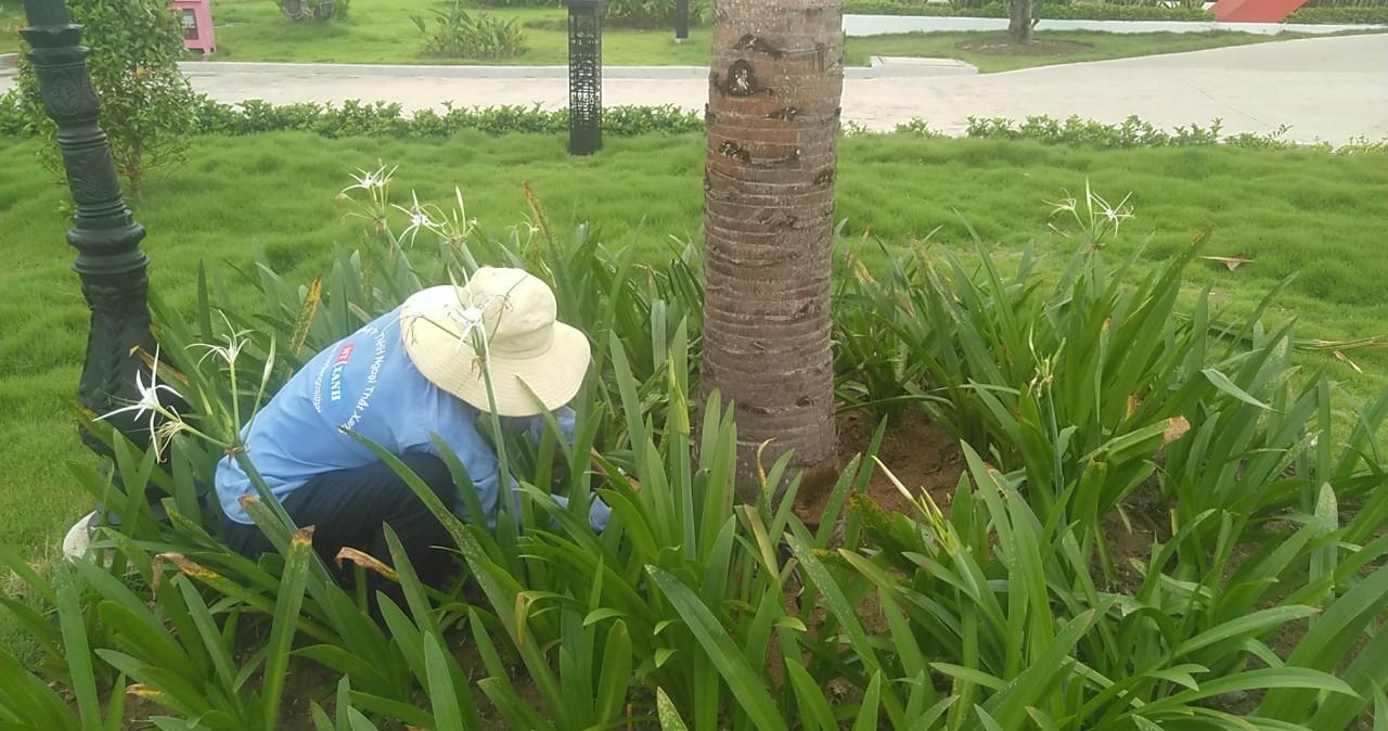 Dịch vụ chăm sóc cây xanh tại Thủ Dầu Một Bình Dương