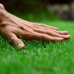 Công ty trồng cỏ thảm tại Bàu Bàng Bình Dương