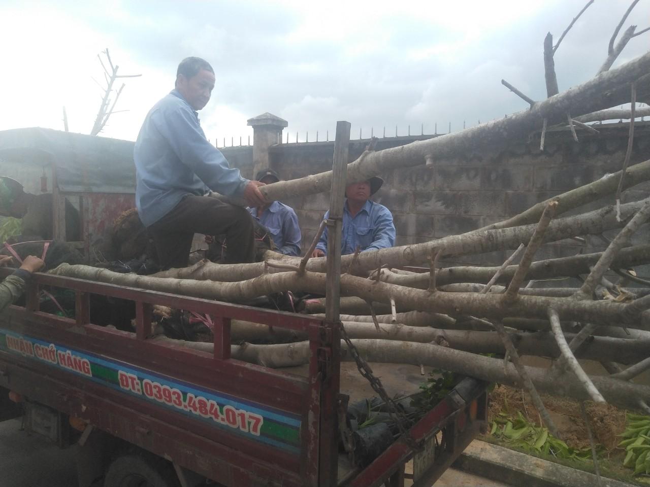 Công ty cây xanh tại Tây Ninh