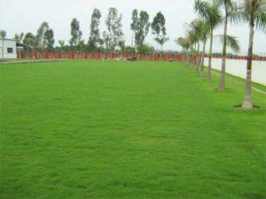 Công ty trồng cỏ thảm tại Đất Cuốc Bình Dương
