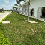 Công ty trồng cỏ thảm tại Tân Uyên Bình Dương