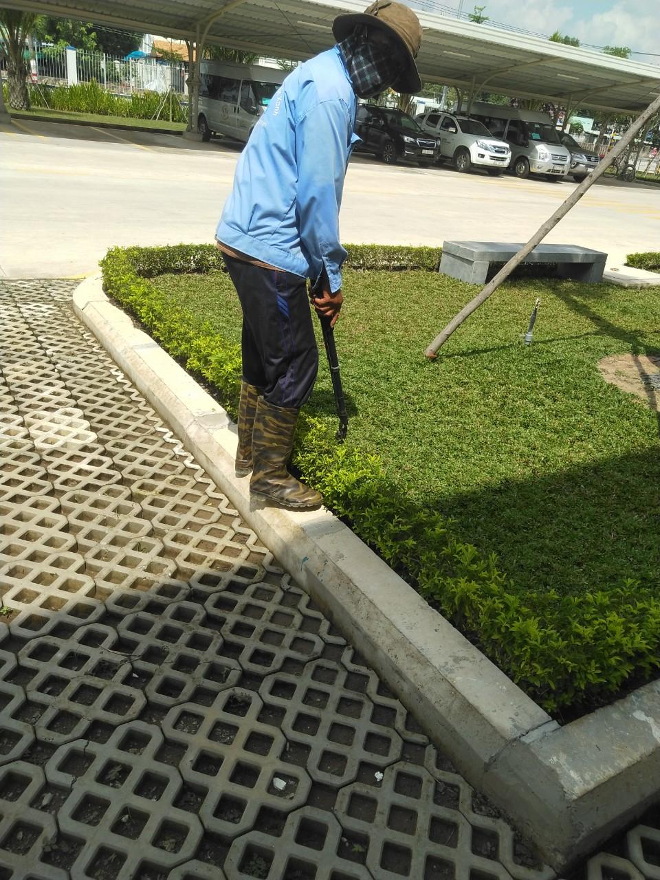 Dịch vụ trồng cỏ, cây xanh tại Bình Phước