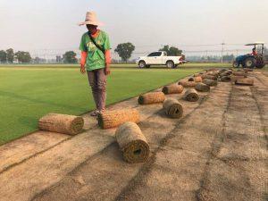 Quy trình trồng cỏ thảm tại Thủ Dầu Một Bình Dương