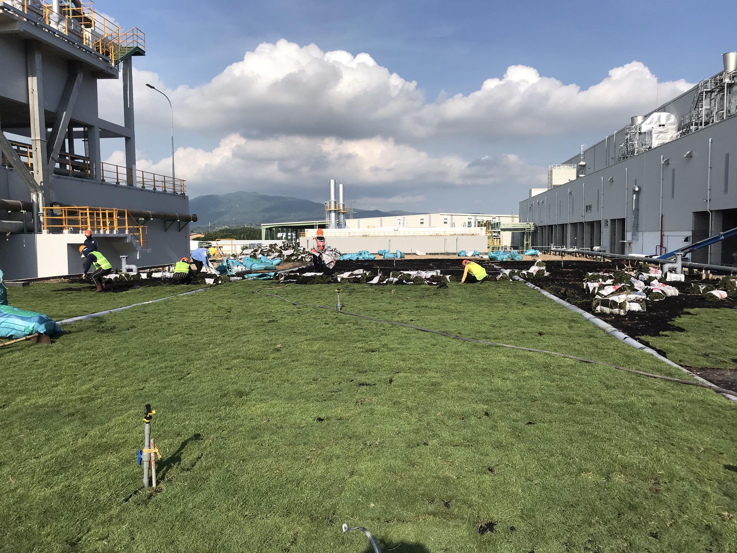Công ty trồng cỏ thảm tại Chơn Thành Bình Phước