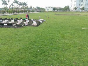 Công ty trồng cỏ thảm tại Đức Hòa Long An