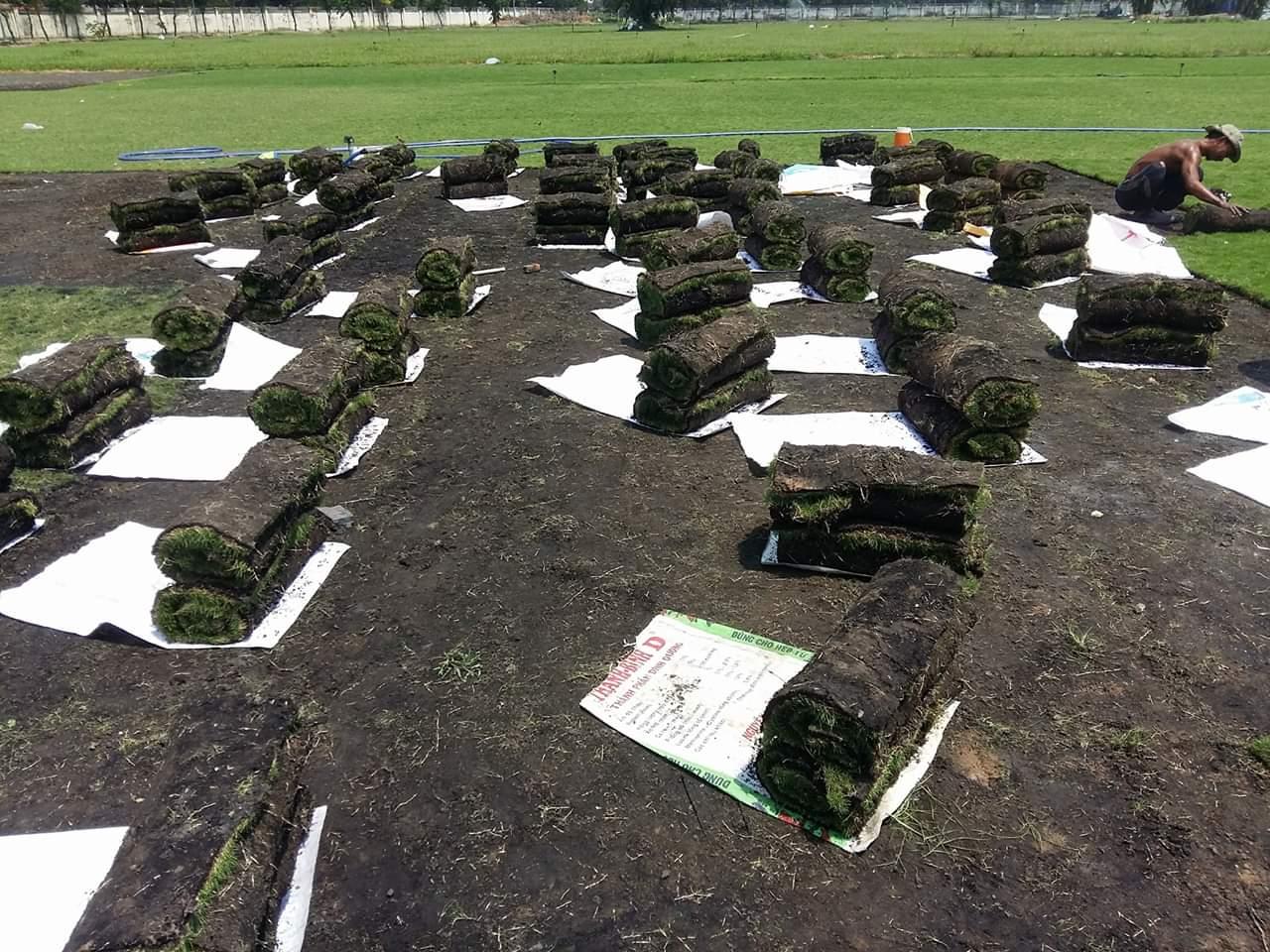 Công ty trồng cỏ thảm tại Gò Dầu Tây Ninh