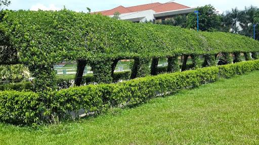 Chuyên chăm sóc cây xanh KCN Bình Đường